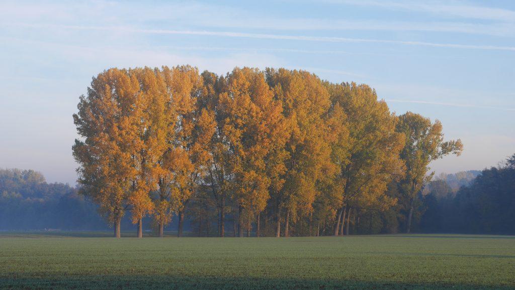 Balbrede Pappeln im Herbst - Foto: A. Heuwinkel-Otter